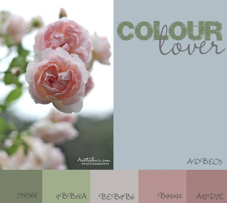 colorlover rose