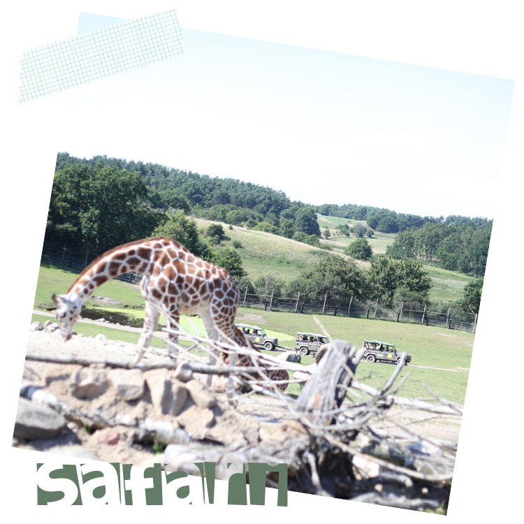 safari tape